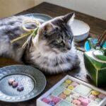 【2月22日は猫の日】かわいい猫のお茶ギフト・グッズ おすすめランキング