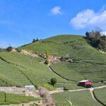 日本を代表する高級ブランド茶「宇治茶」の特徴・おすすめギフトランキング